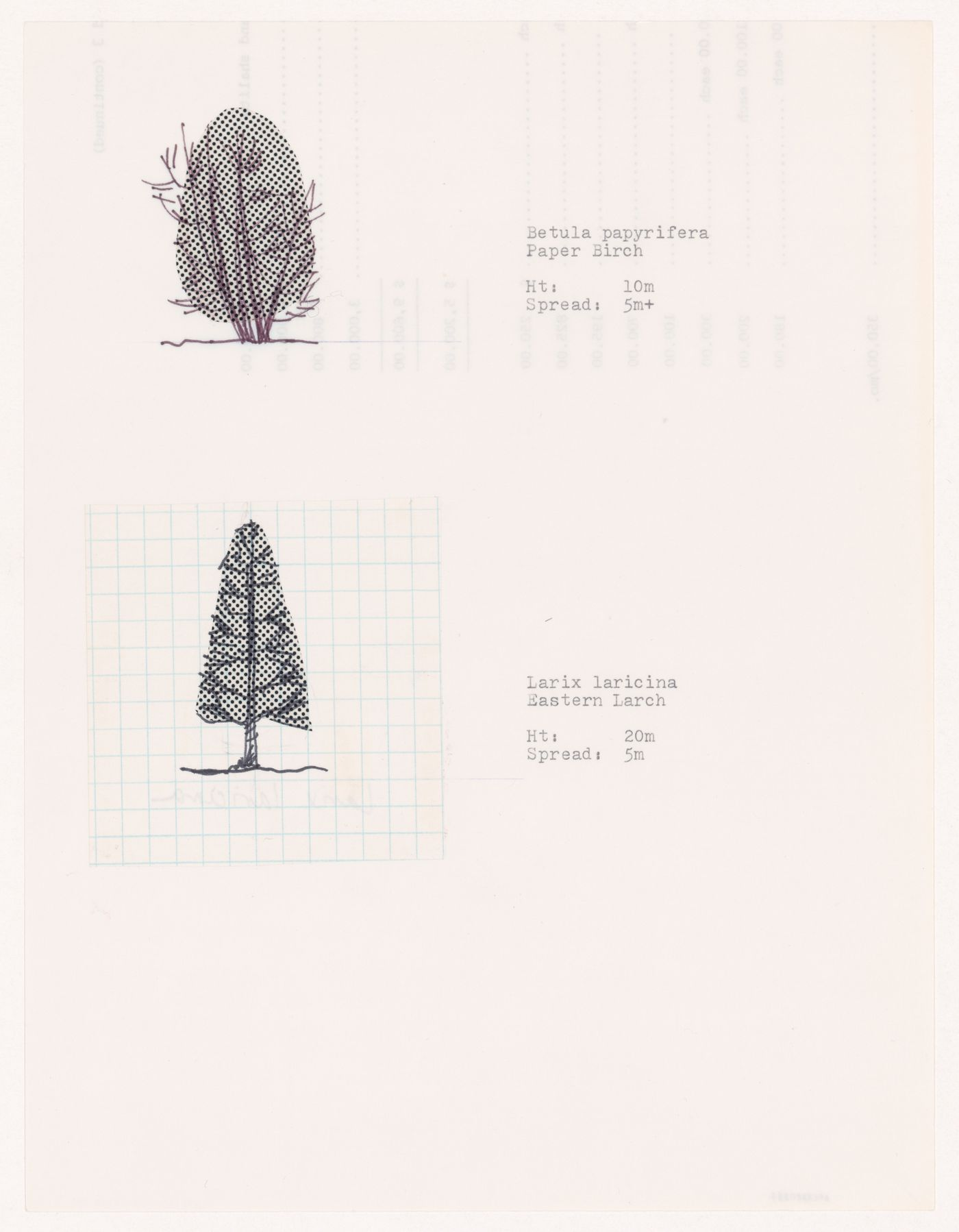 Plant specifications with illustration of specimens for National Gallery of Canada, Ottawa, Ontario